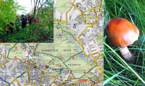 Hampstead Heath Map