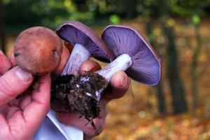 fungi boutique2