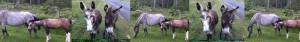 pony banner