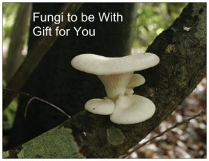 fungi gift card